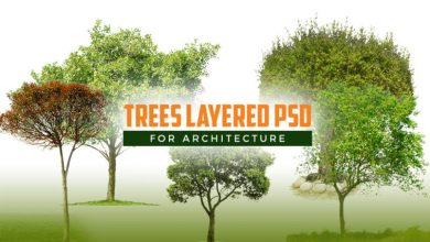 Photo of Trees Layered PSD for Architecture